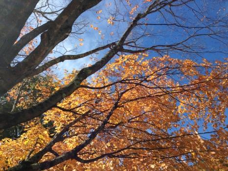 Autumn beauty, Elizabeth Park